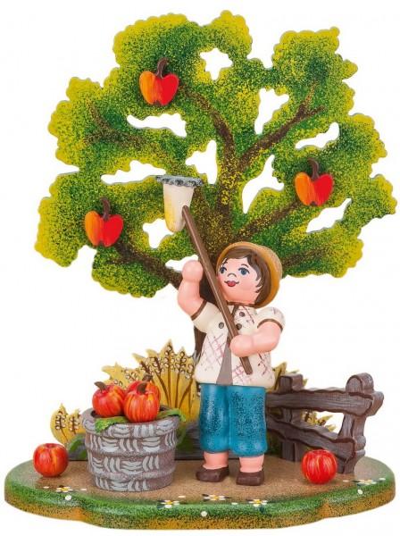Junge erntet Äpfel vom Baum von der Hubrig Serie Landidyll